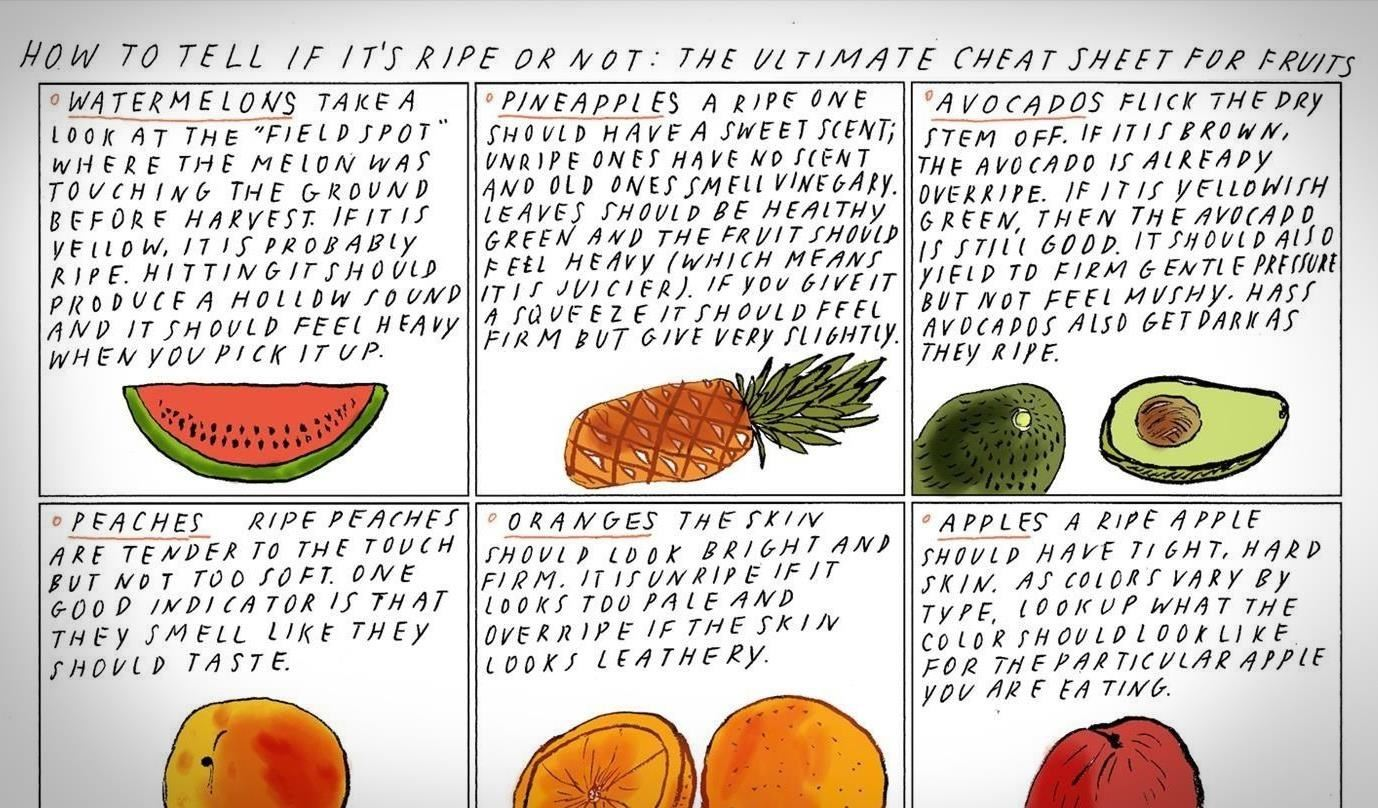 how to know when to pick cantaloupe