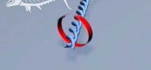 Tie a haywire twist fishing knot
