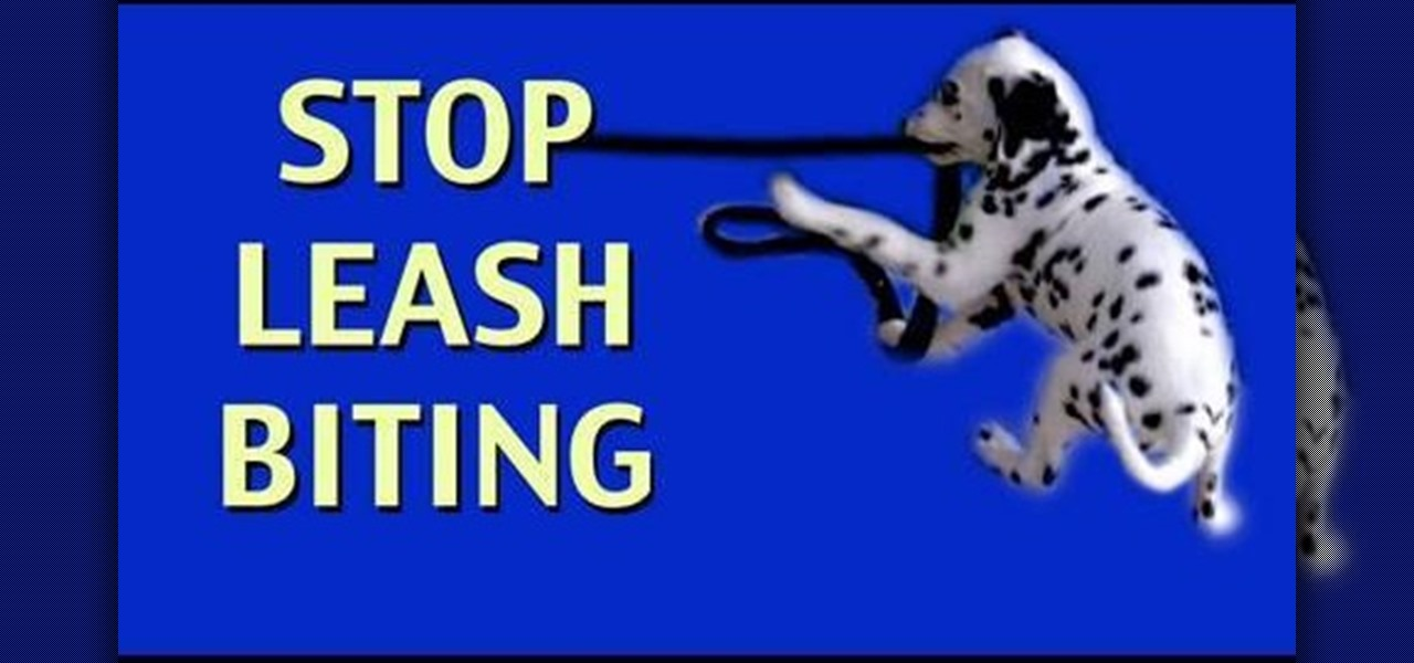 Stop Dog Biting Leash While Walking