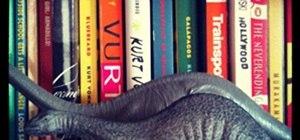 Bookosaurus