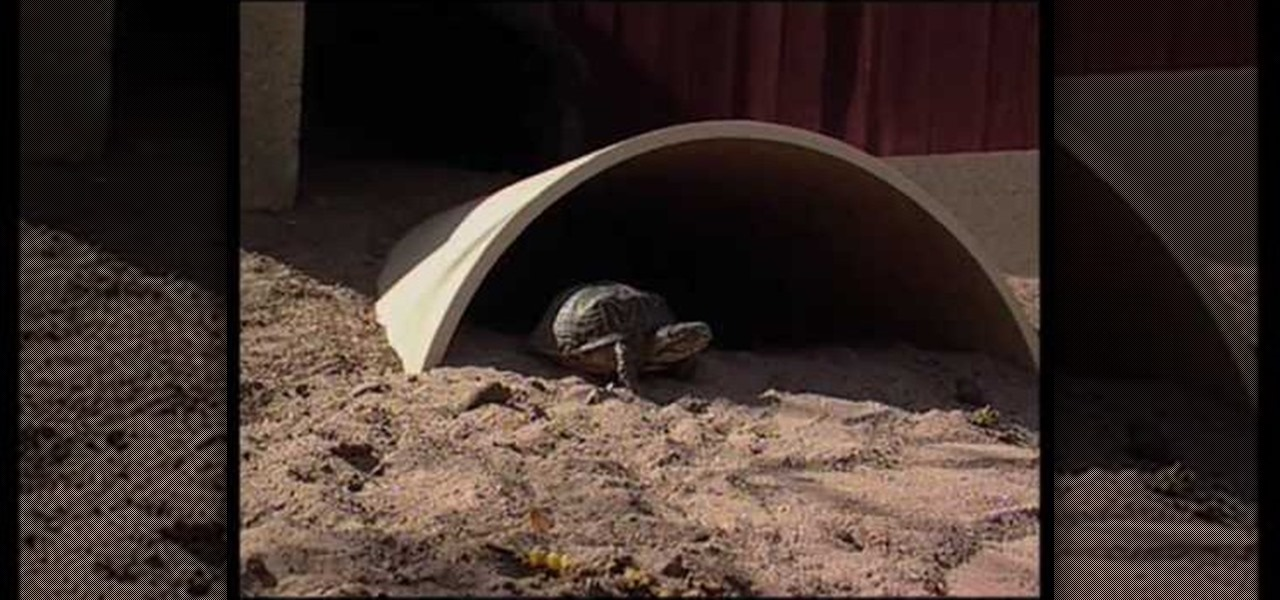 How to create a desert tortoise habitat reptiles for What do u need to build a house