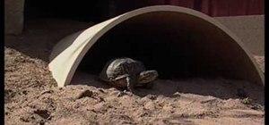 Create a desert tortoise habitat