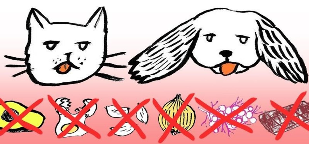 12 Dangerous People Foods You Should Never Feed Your Cat or Dog