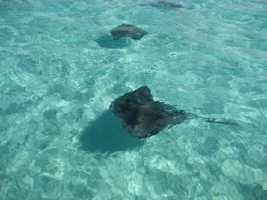Stingrays and the Shuffle