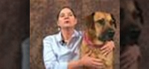 Use acupressure on a dog with wrist arthritis