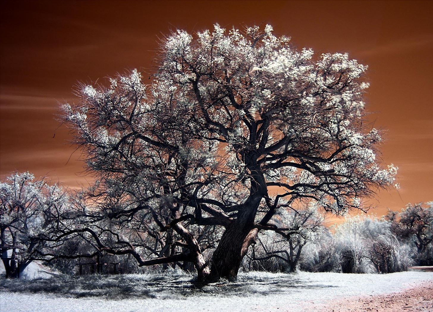 How to Find Hidden Blood Splatter Stains on Your Walls with This Infrared Photography Hack