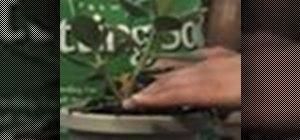 Re-pot a plant