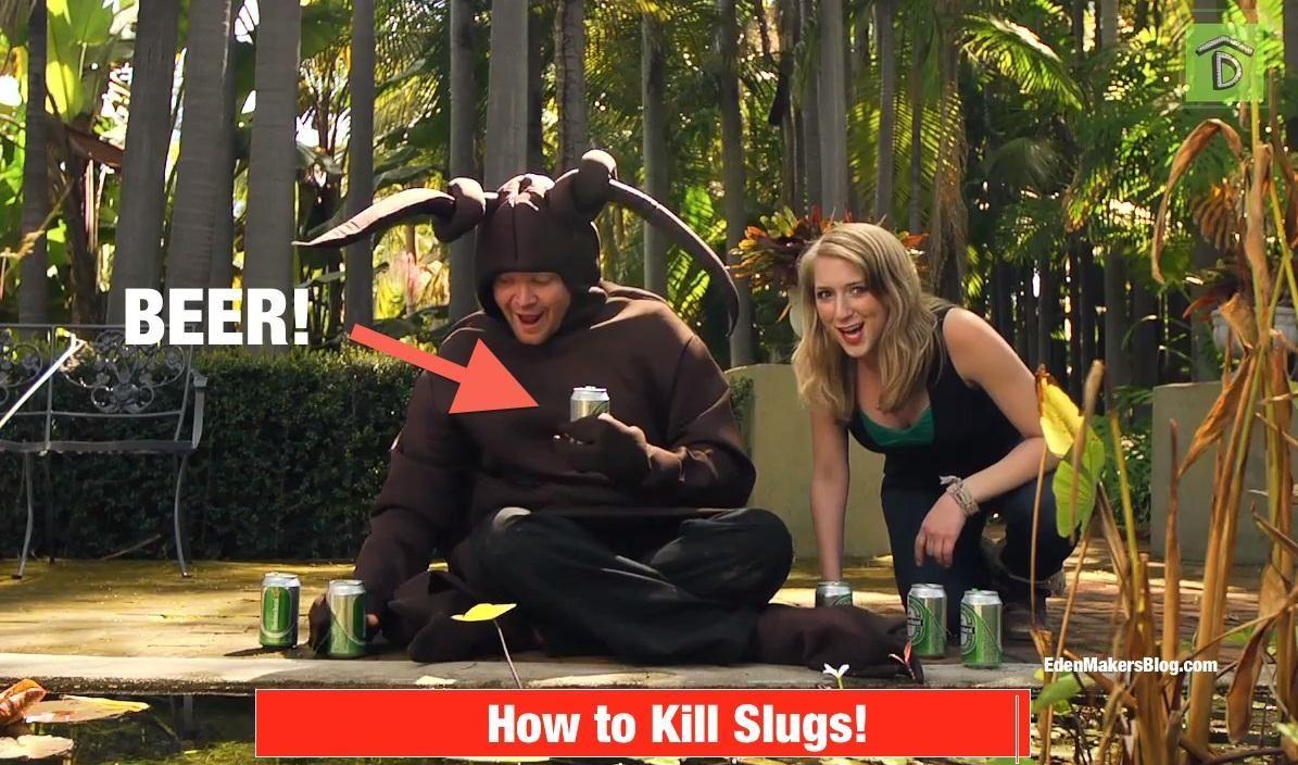 How to Kill a Slug: An Original Music Video