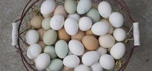 Egg Mine