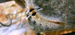Psychadelic Caterpillar in Hampi