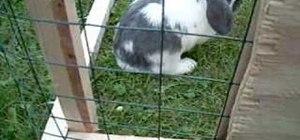 Build an outdoor rabbit run