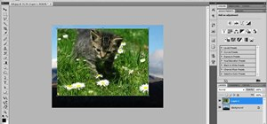 Crop and resize pictures in Photoshop as a beginner