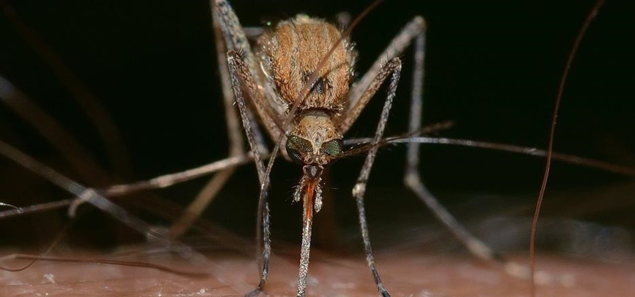 Officials Shocked to Find West Nile in Las Vegas Mosquitoes