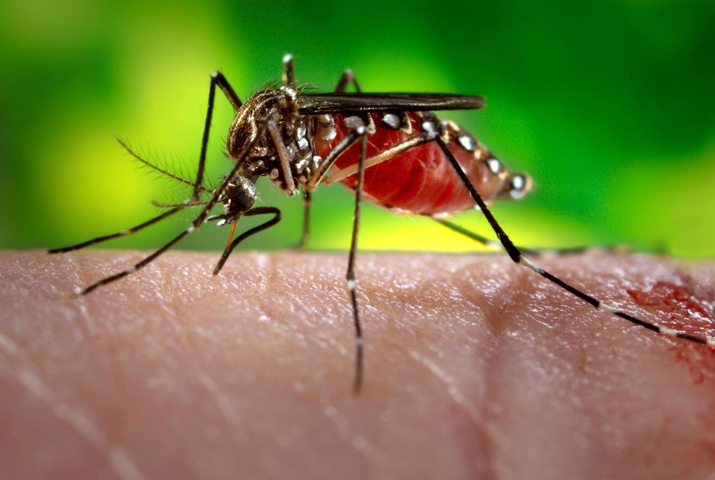 Blood Test Can Predict Severe Dengue Complications, Saving Kids' Lives
