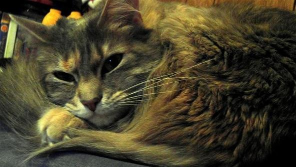 Pet Portrait Challenge: You Disturbed My Sleep For This...?