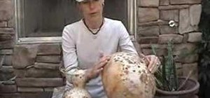 Measure a gourd's thickness without cutting it open