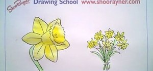 Draw a daffodil for St David's Day