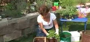 Make a container herb garden