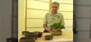 Grow Bonsai trees