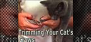 Trim your cats claws