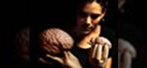 Dissect a sheep brain to compare to a human brain