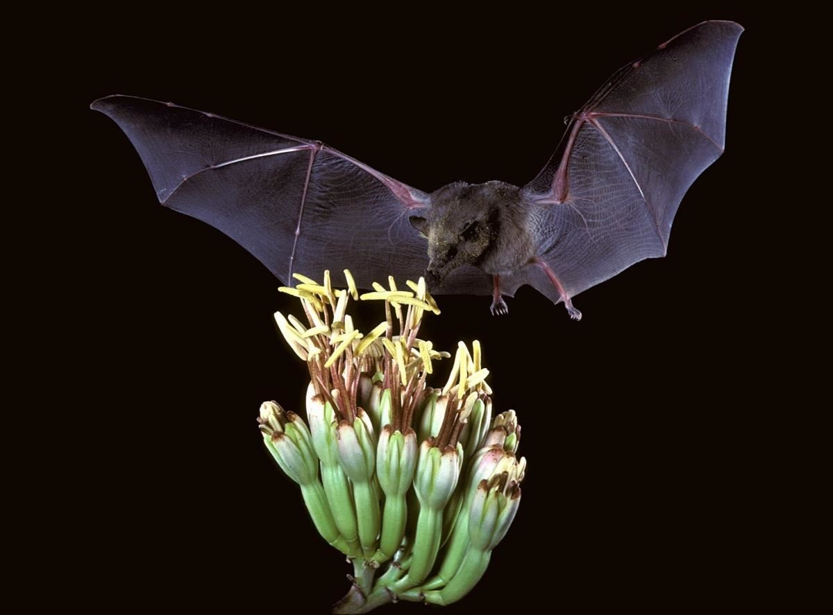 Bats & Viruses — Friend or Foe?