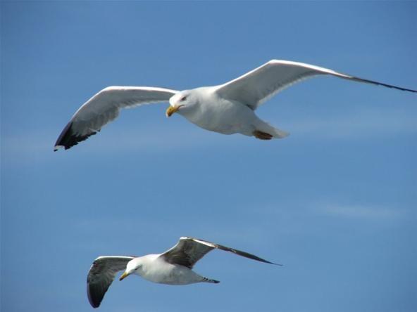 Seagull Scare
