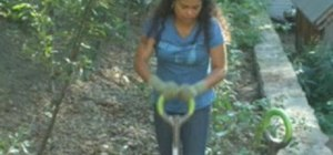 Plant banana trees