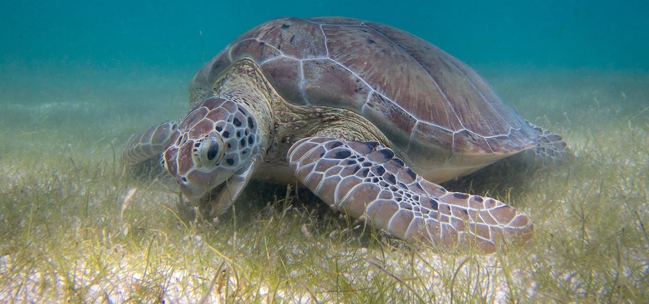 A Beach Infected with Fecal Coliform Can Ruin Your Vacation, but Seagrasses Can Save the Day
