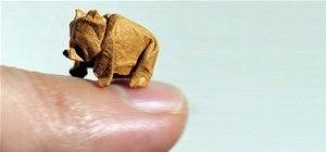 Fold Wet Origami