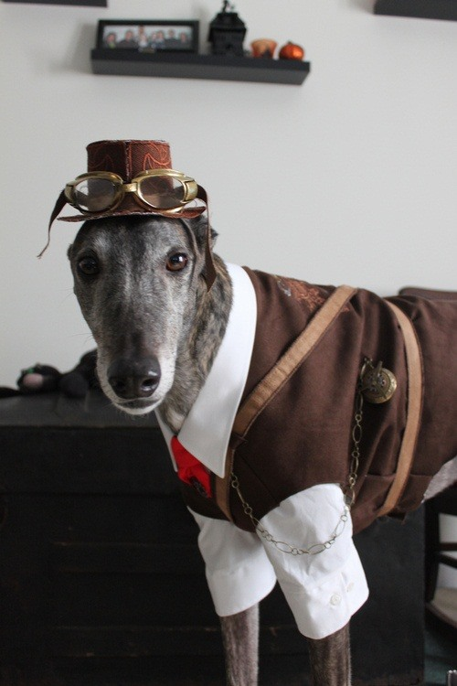 These are not people clothes; you can tell by how well they fit. These clothes were custom-made to fit this dog. As it says in the article about it (which ... & 8 Animals That Think Theyu0027re Steampunk (Plus Tips for Steampunking ...