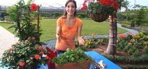 Maximize your gardening space