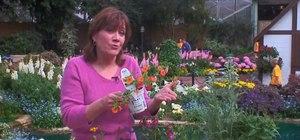 Design a flower garden