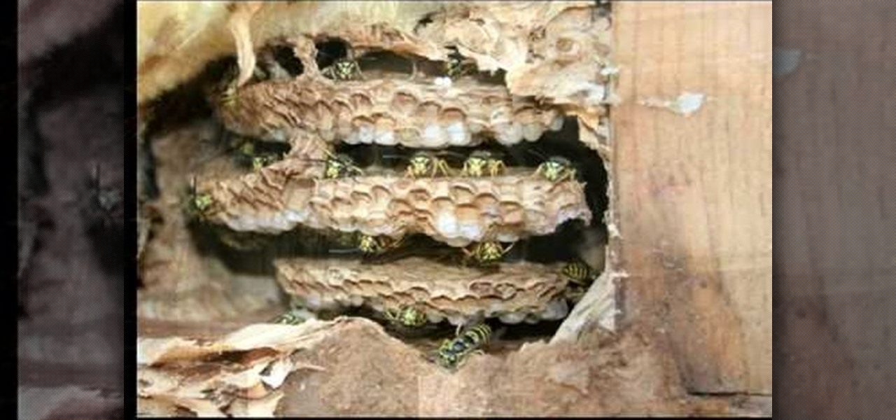 How To Prevent Yellow Jackets From Nesting In Your Home
