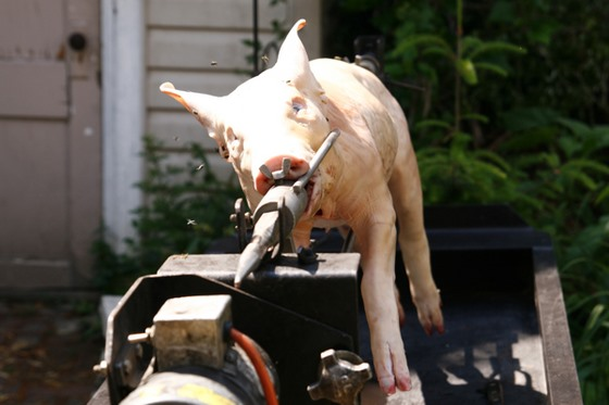 HowTo: Roast a Pig on a Spit