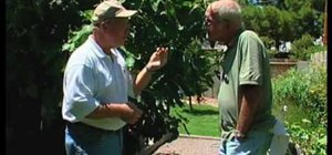 Grow a fig tree in southern New Mexico