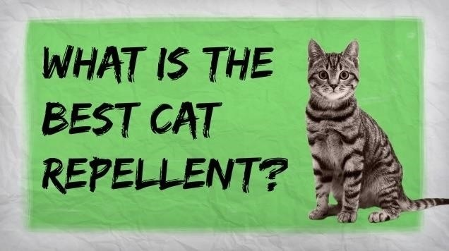 How To Make A Homemade Cat Repellent Home Remedies For Repelling Cats 171 Housekeeping