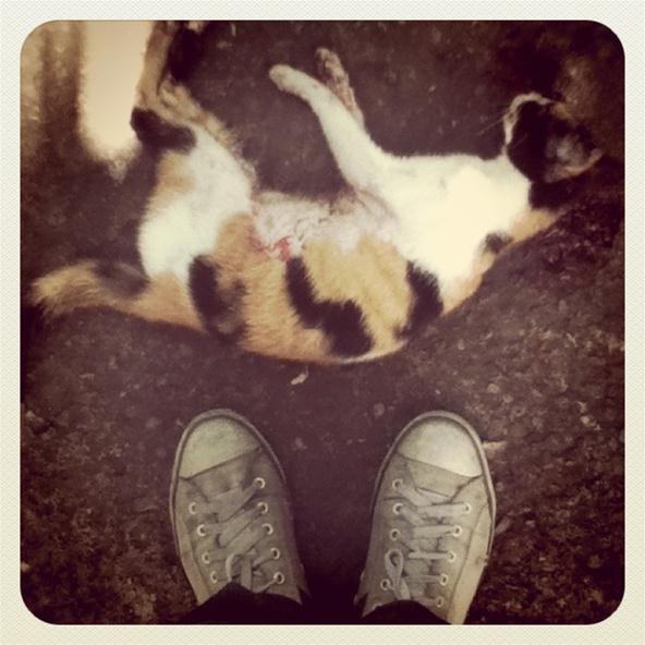 Instagram/Picplz Challenge: Dead Cat