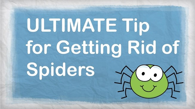 how to get rid of spiders in roof