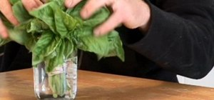 Store basil properly and keep it fresh
