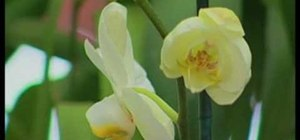 Pick out easy orchids to grow for your home