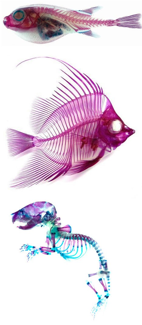 Japanese Scientists Turn Dead Animals Into Art