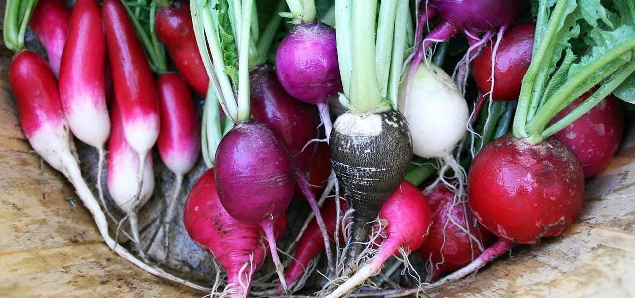 The Secret Powers of the Humble Radish