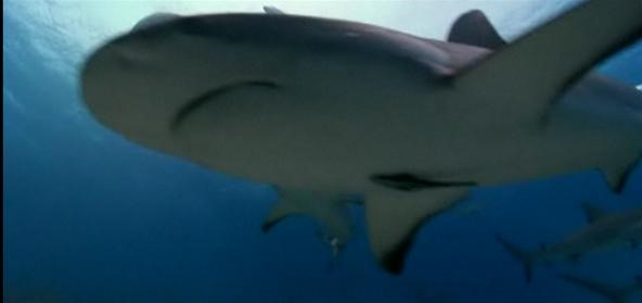 Shark Survival: Guide to Getting Out Alive