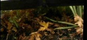 Hunt for wild magic mushrooms & avoid poisoning
