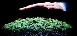 Robo-Plants Respond to Human Touch