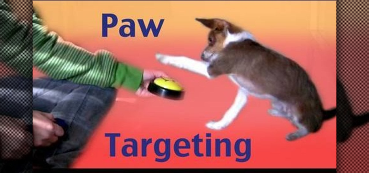 how to teach your dog to give you paw