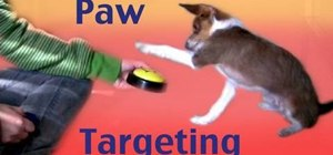 Teach a dog to target an object with its front paws