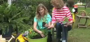 Plant a container herb garden