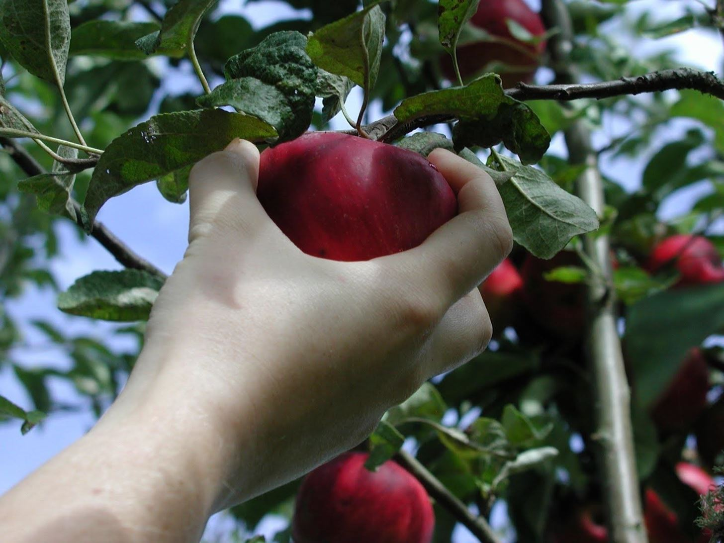 Nature's Secret Code: How to Pick Perfectly Ripe Fruit Every Time